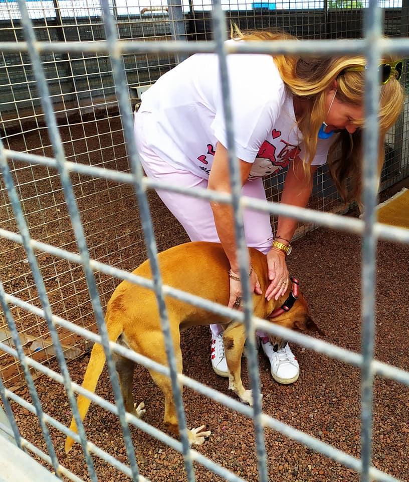 Bienestar Animal lanza una campaña para concienciar en el cuidado de las mascotas y evitar el abandono