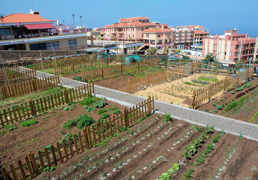 El Ayuntamiento abre este lunes el plazo para solicitar parcelas en el huerto ecológico urbano municipal