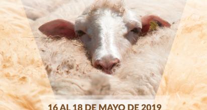 La Orotava acoge el IV Festival de la Lana de Canarias los días 17 y 18 de mayo