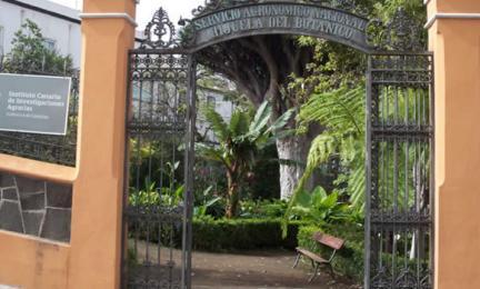 Hijuela del jard n bot nico de aclimataci n de la orotava for Centro de eventos jardin botanico