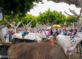 El próximo sábado, 29 de junio, se celebra en la Villa la popular y tradicional Feria de Ganado