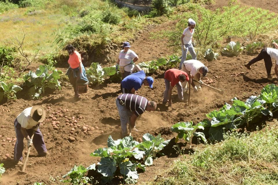 El ayuntamiento de La Orotava realiza un estudio sobre la situación actual del sector primario