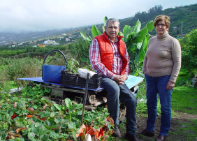 El Mercadillo Valle de La Orotava tiene 8.800 metros cuadrados de cultivo ecológico en La Perdoma